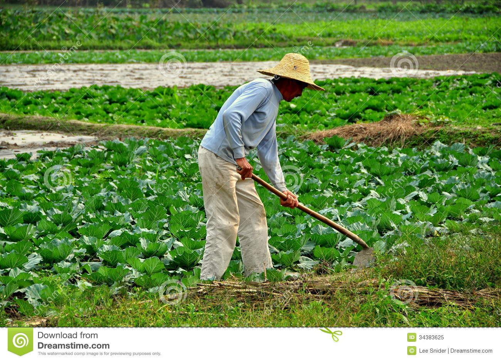 Pengzhou, China: Farmer Working In Field Editorial Image - Image ...