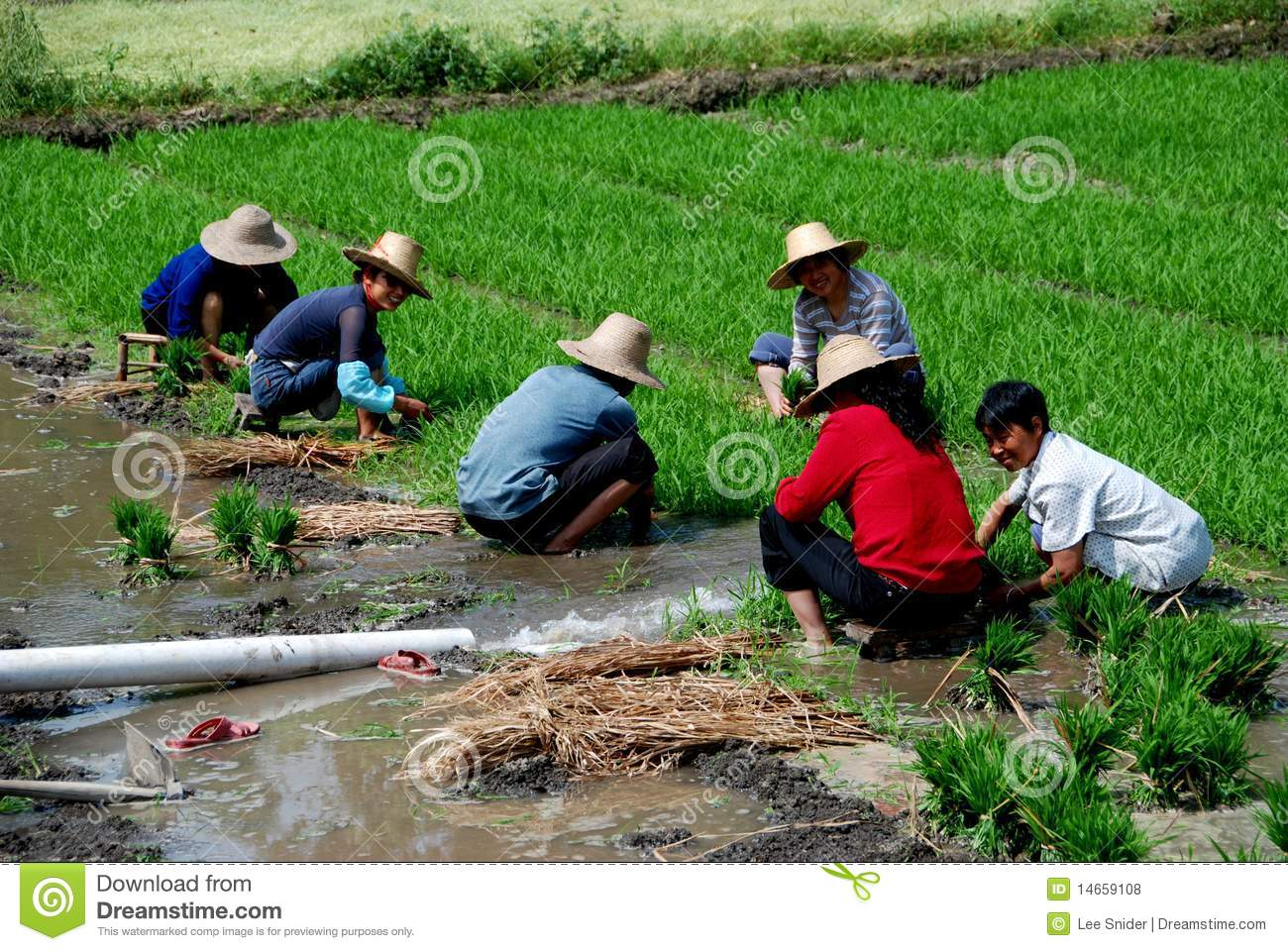 chinese farmers - photo #32