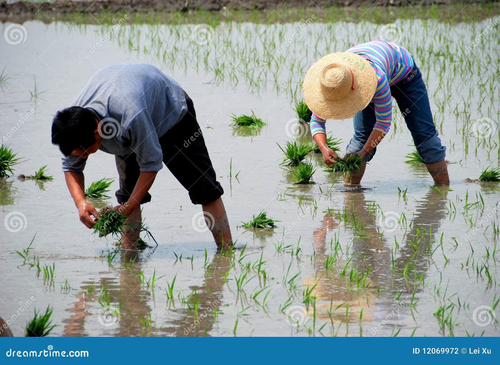 China Reis