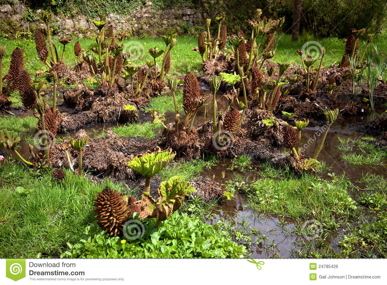 Penryhn Castle bog garden stock photo. Image of wales - 24785426