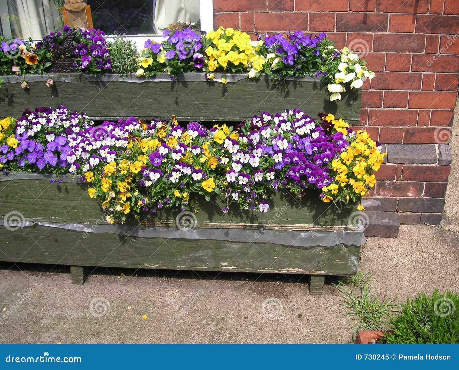 Pensées dans des cadres de fleur