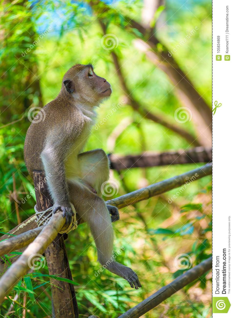 a pensive lonely monkey sits on a fence in the shade