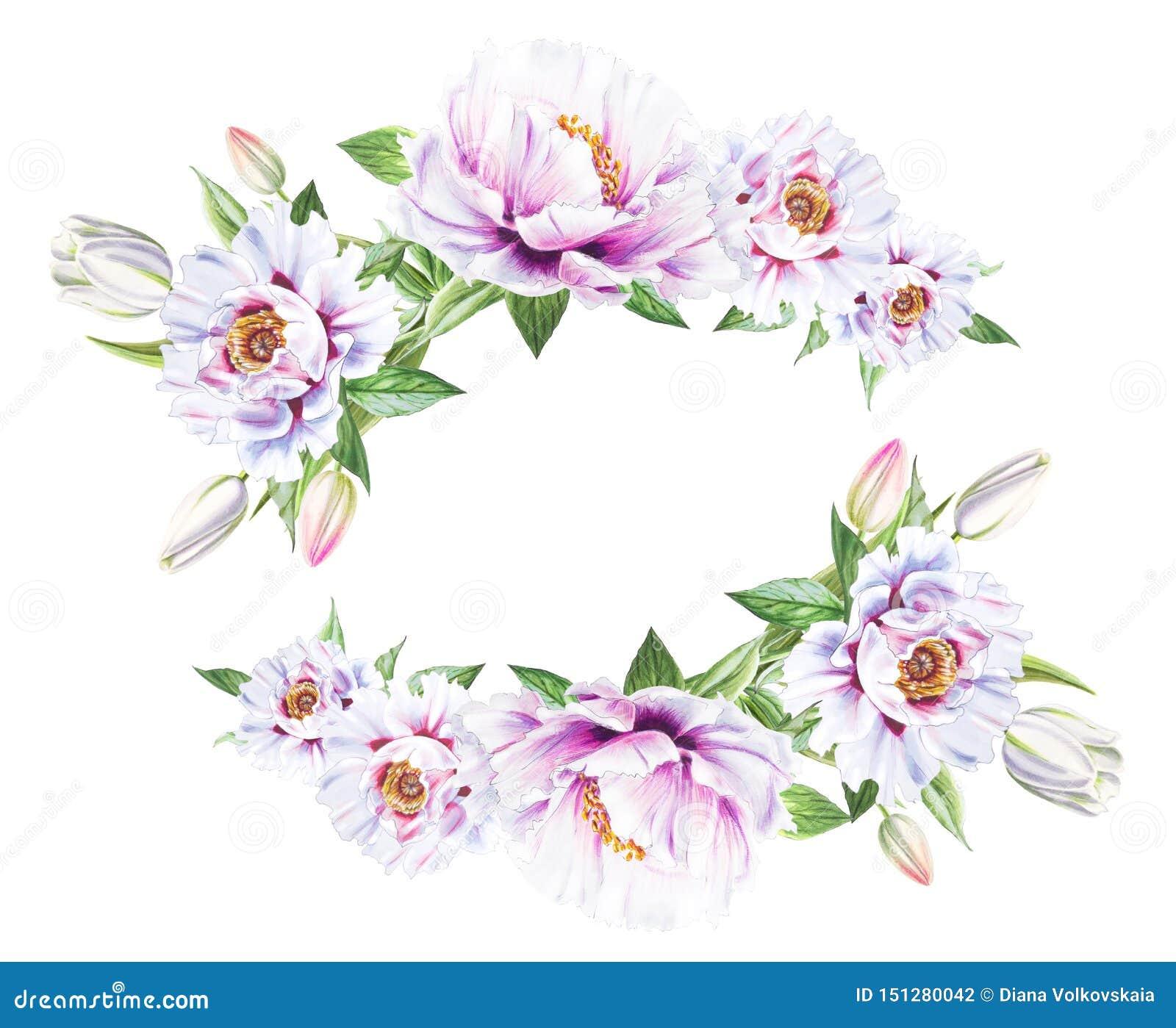 Peonía blanca hermosa y marco blanco de los tulipanes Ramo de flores Impresi?n floral Dibujo del marcador
