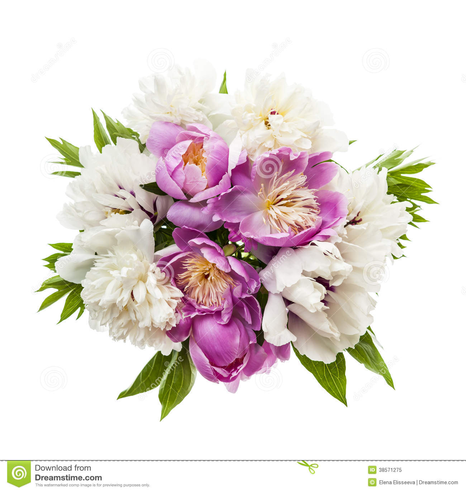 Peony flower bouquet isolated stock image image of isolated peony flower bouquet isolated izmirmasajfo