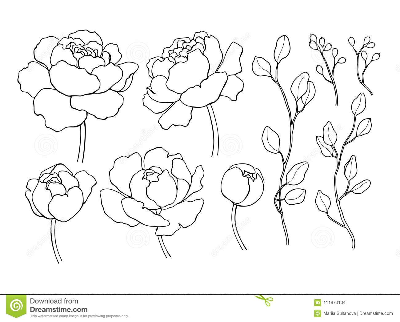 Peony flower and leaves line drawing vector hand drawn outline