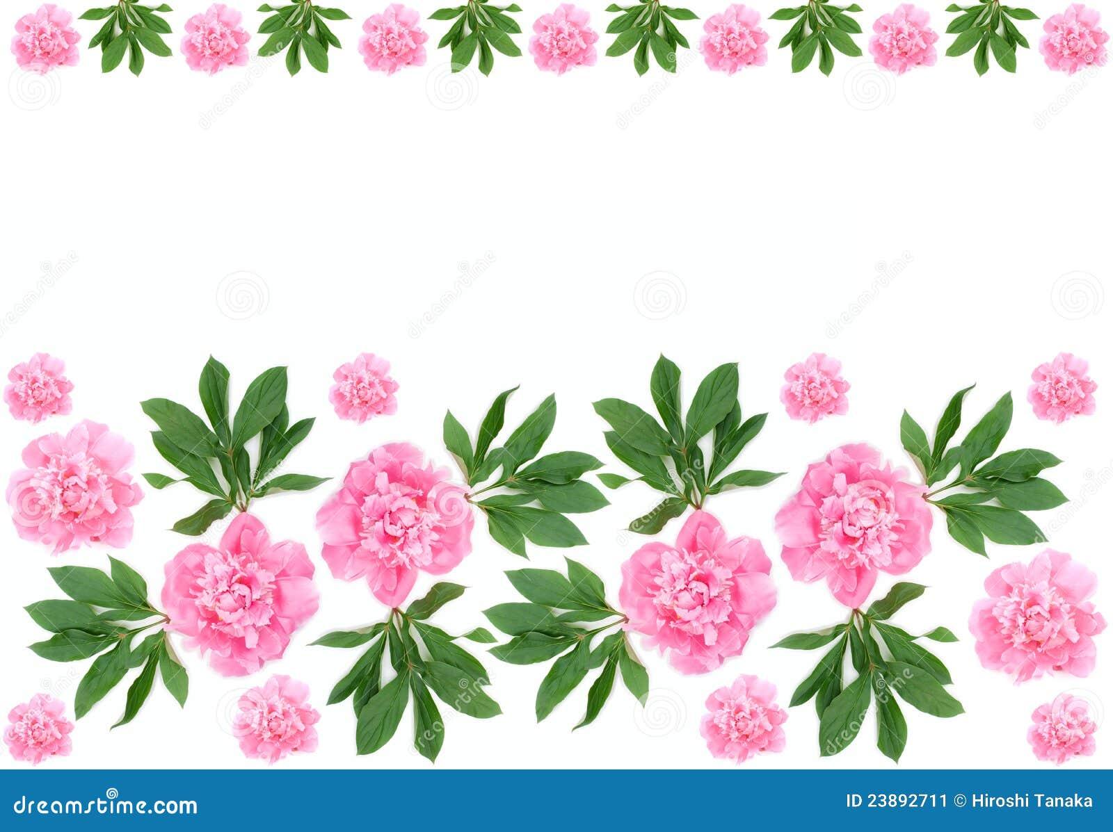 Peony flower isolated on white stock vector 368014568 shutterstock - Vector Peony Flower Isolated On White Stock 450x470 Peony Flowers Crochet Pattern By Jolanda Schneider 851x645 Peony