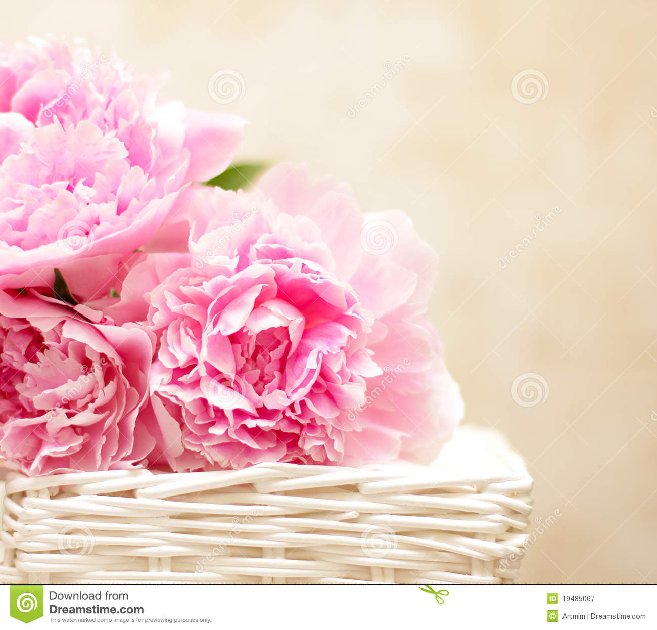 ... In Victorian Style Royalty Free Stock Photography - Image: 19485067: www.dreamstime.com/royalty-free-stock-photography-peony-flowers...