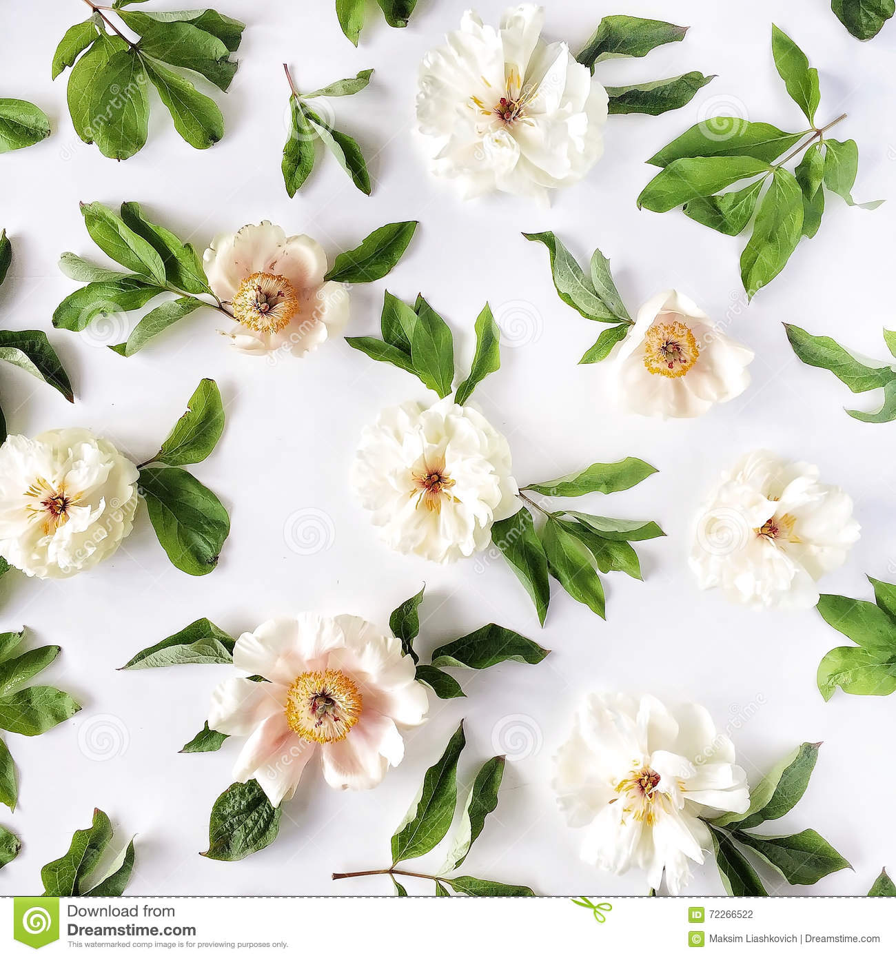 Peony flowers pattern isolated on white background