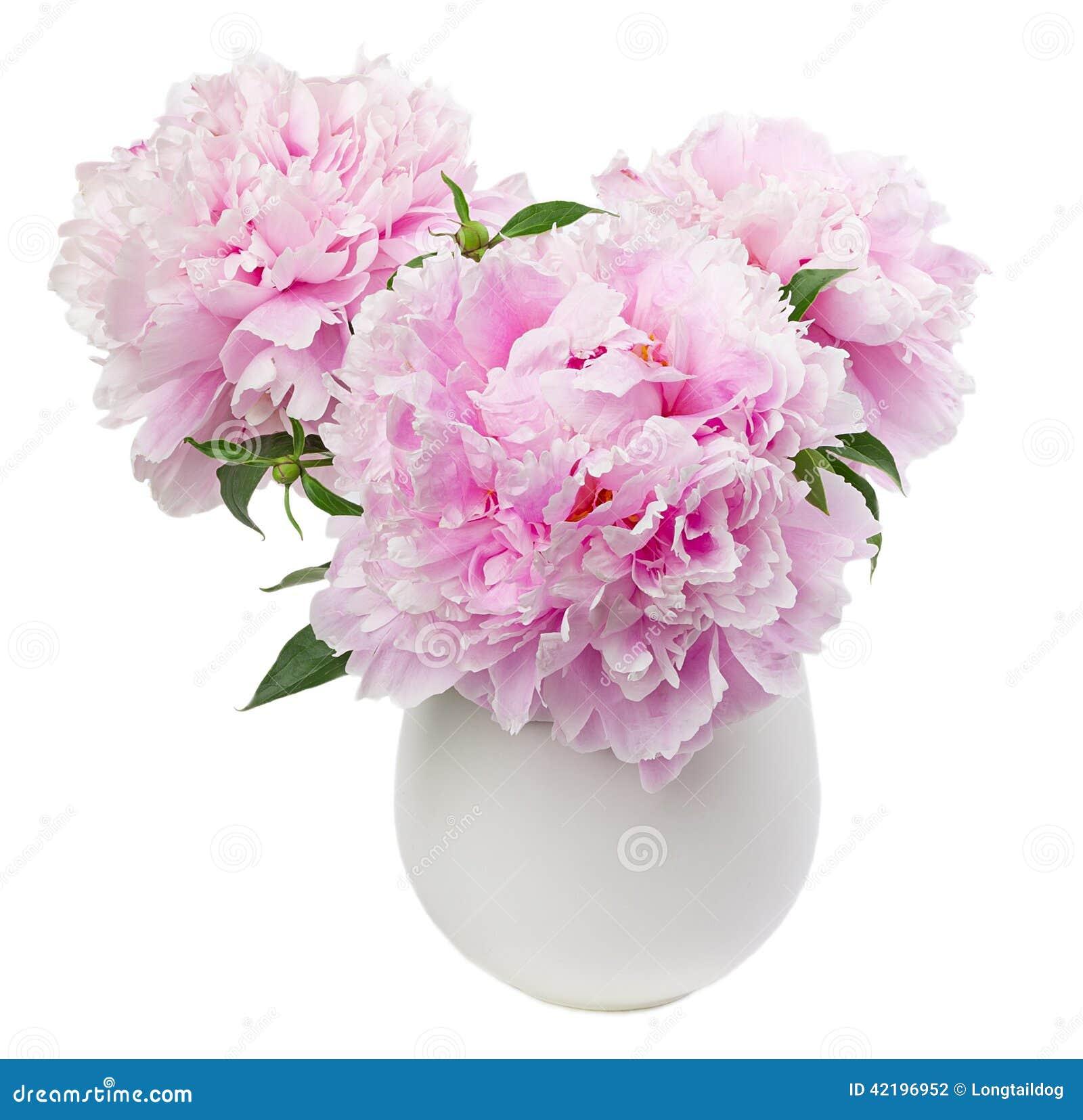 Peony flowers in white vase stock photo image of vase pastel peony flowers in white vase mightylinksfo