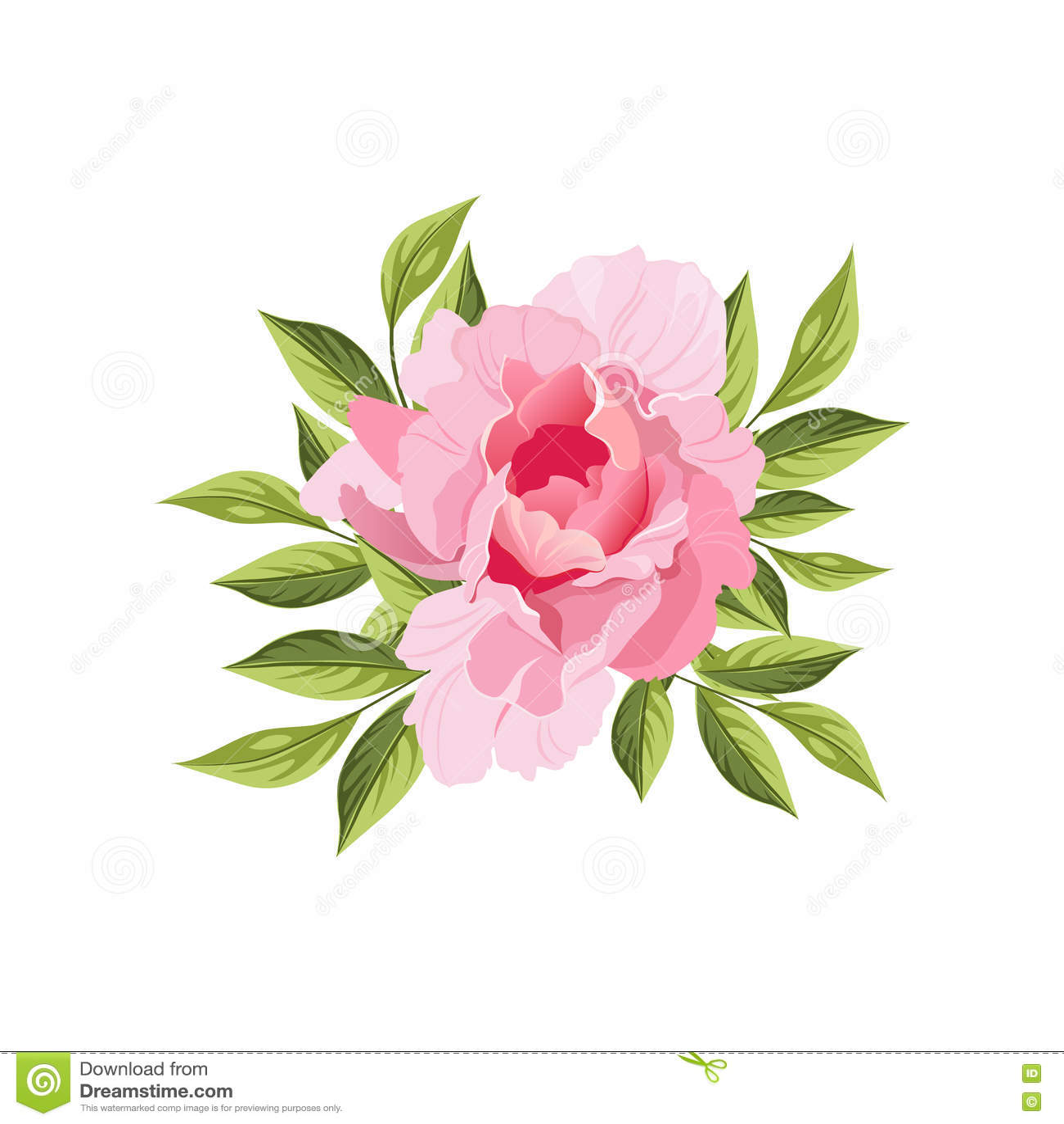 Beautiful english flower garden - Peony Hand Drawn Realistic Illustration Stock Vector