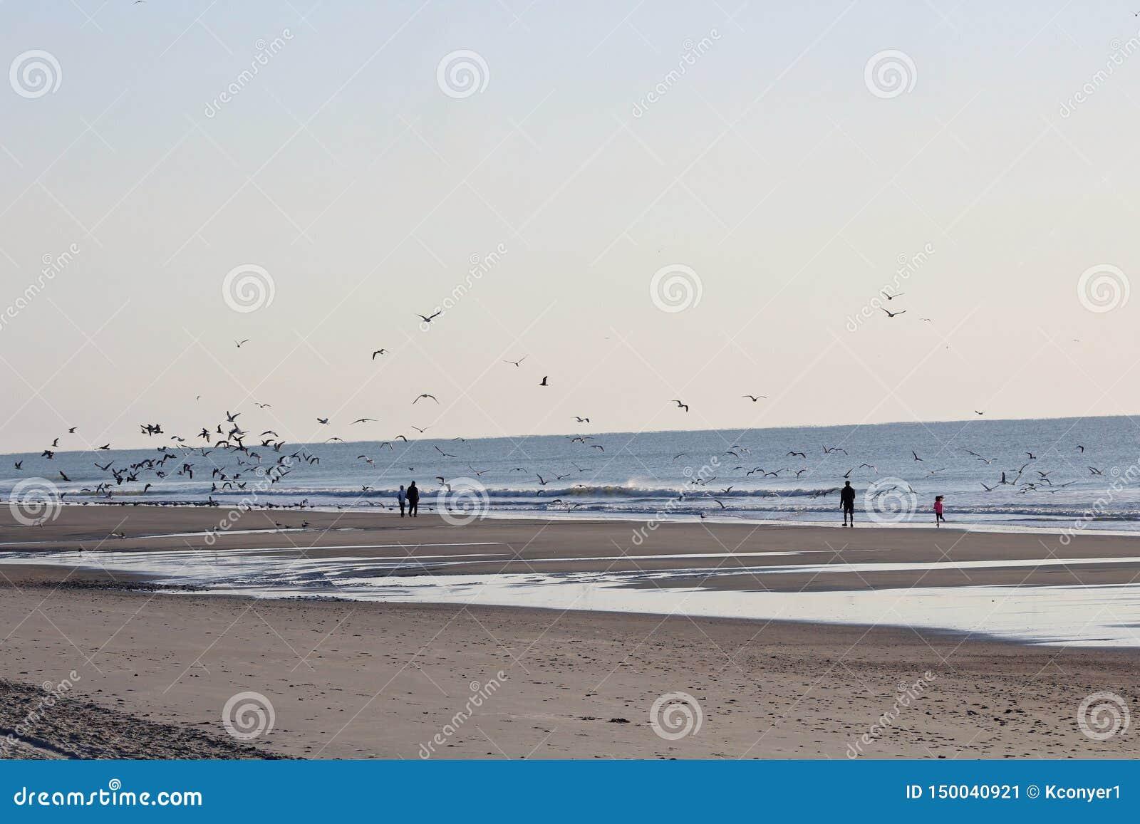 People and birds enjoying the beach