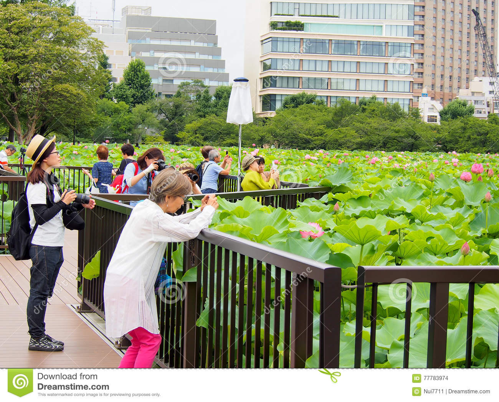 People enjoy taking photograph at lotus pond in Ueno park