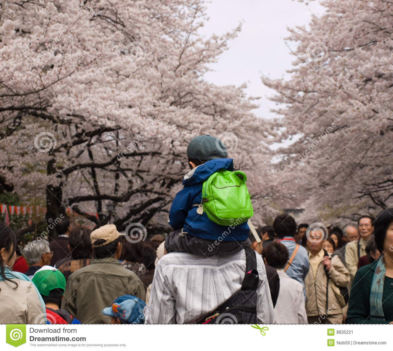 People enjoying cherry blossoms in Japan