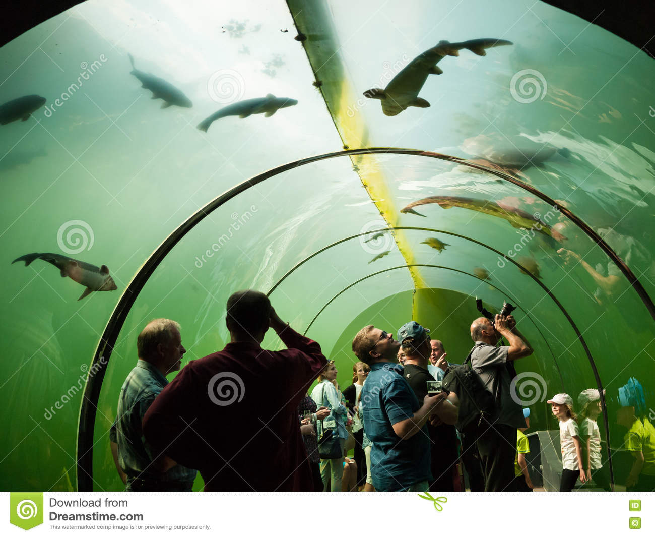Freshwater aquarium fish by region - People In The Freshwater Aquarium Tunnel Look At The Fish Editorial Photography