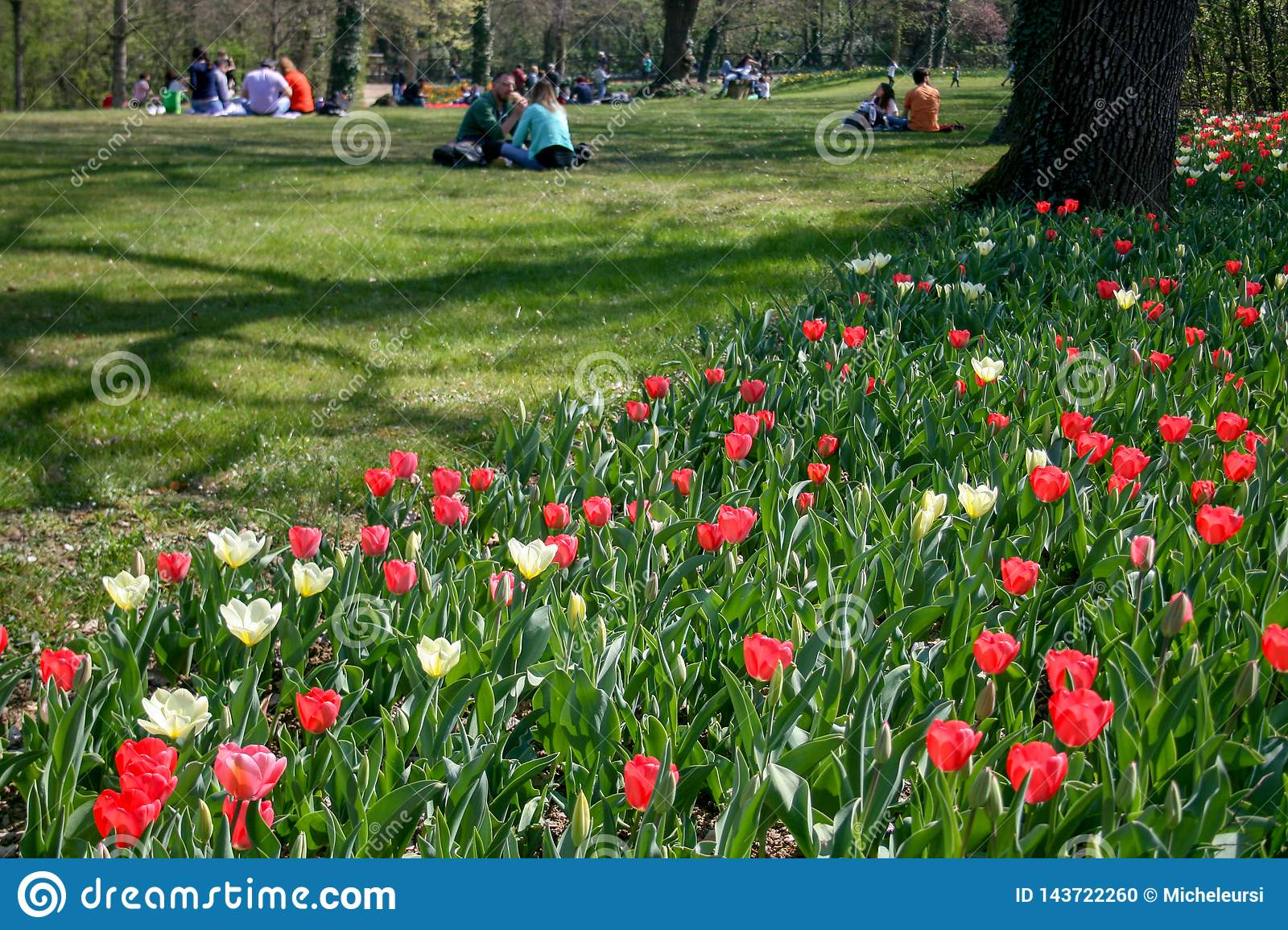People In A Park With Tulips Editorial Image Image Of Meadow Colorful 143722260