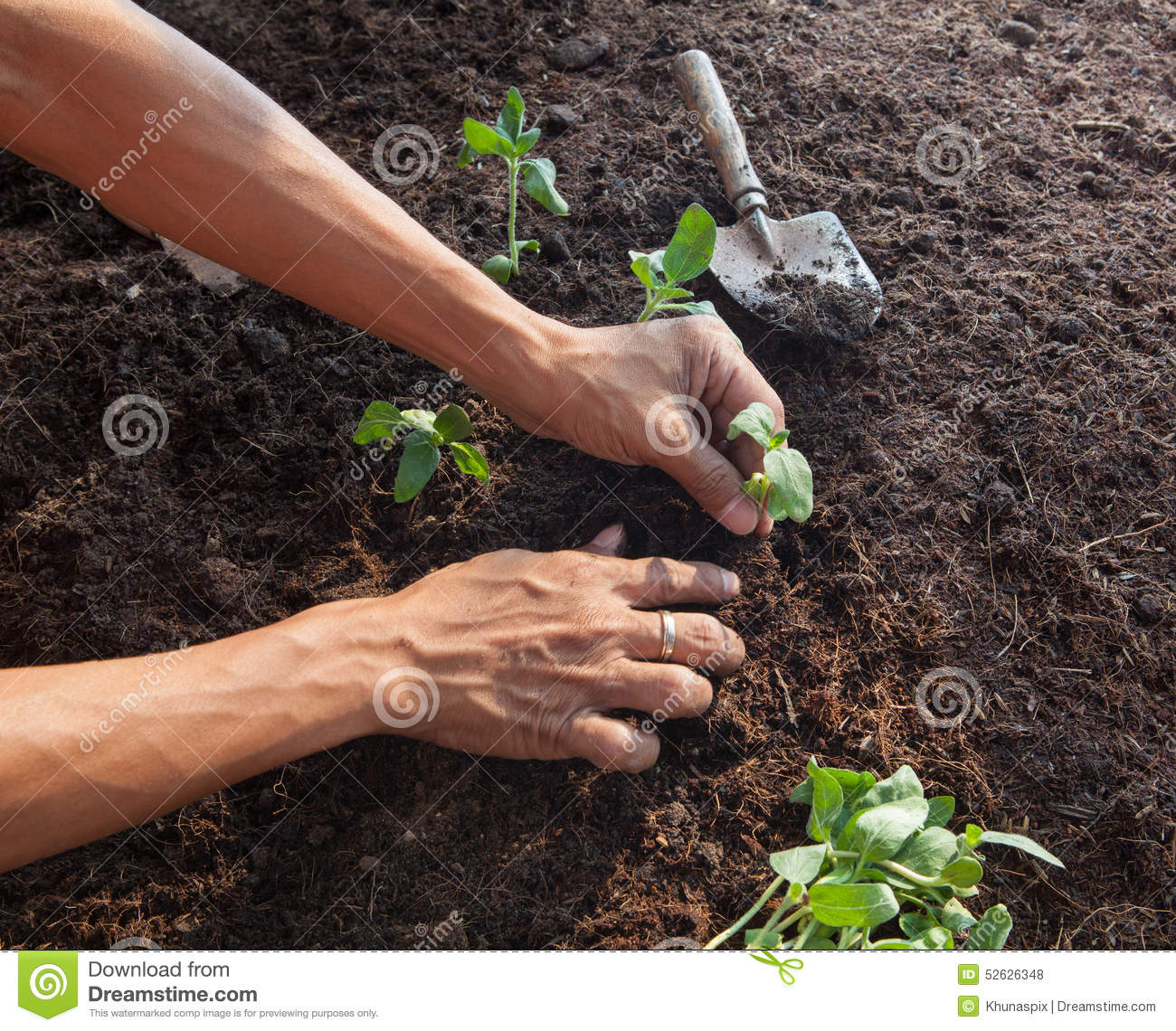 People planting young tree on dirt soil with gardening for Gardening tools used in planting crossword clue