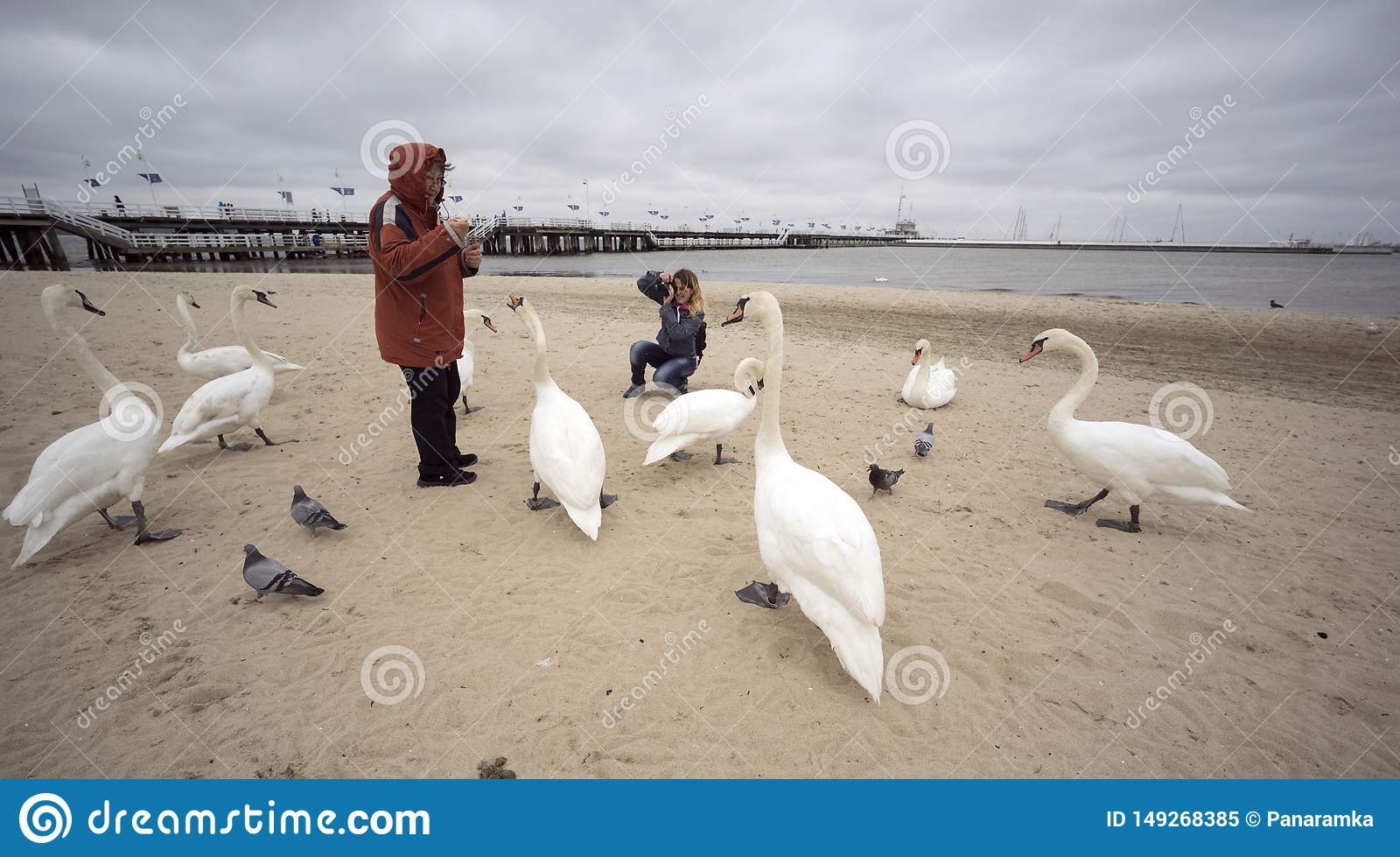 People and Swans in Sopot on the beach