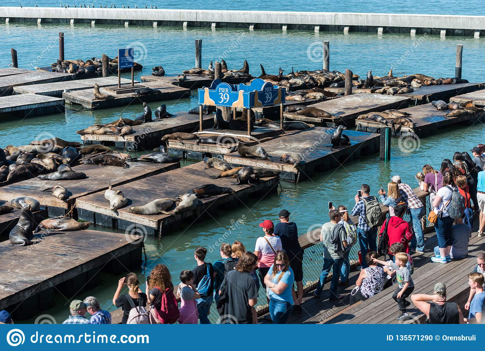 People watching the sea lions at the Pier 39 in San Francisco, California, USA.