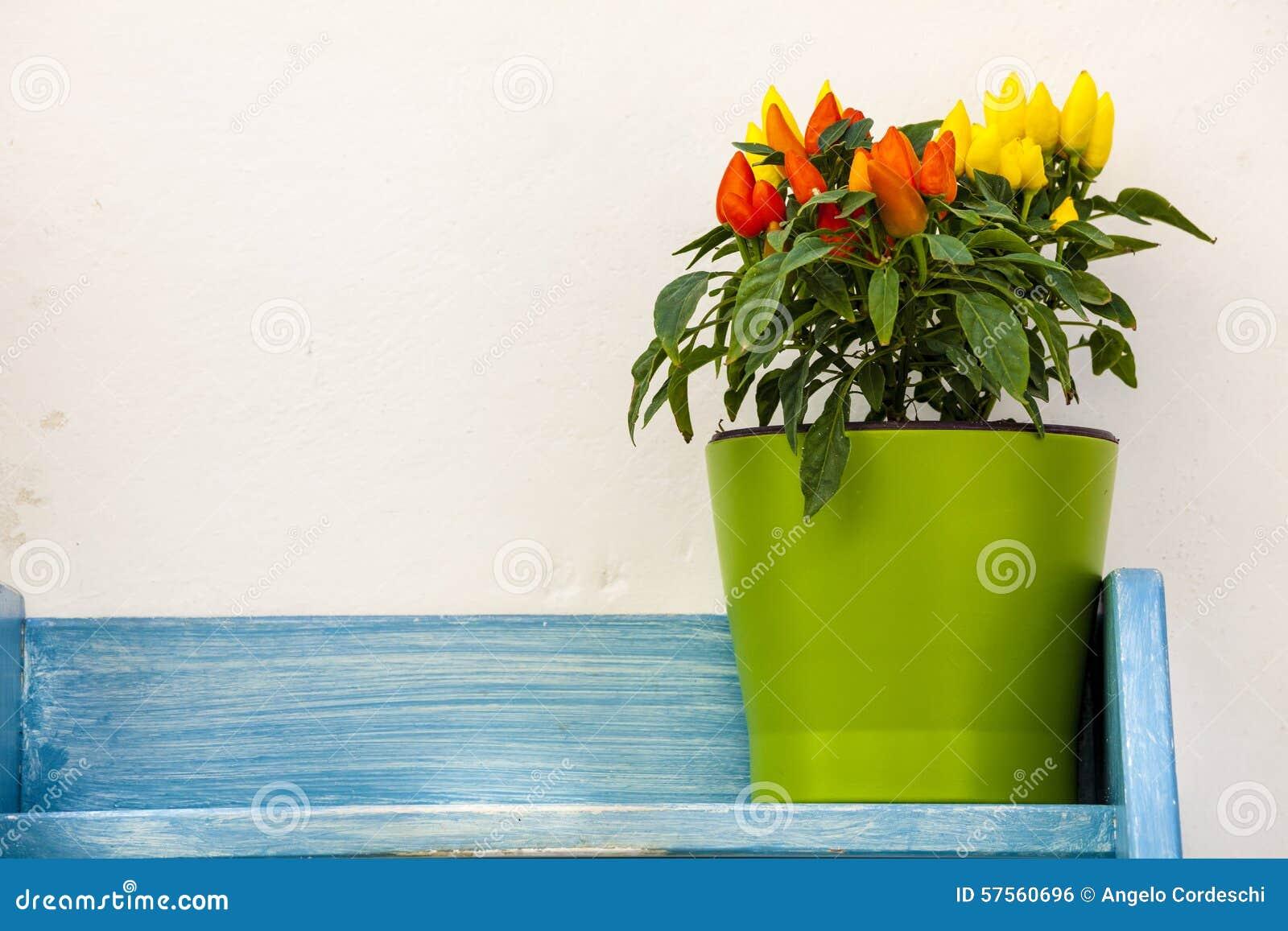 Peperoni del vaso da fiori sul blu di legno dello scaffale