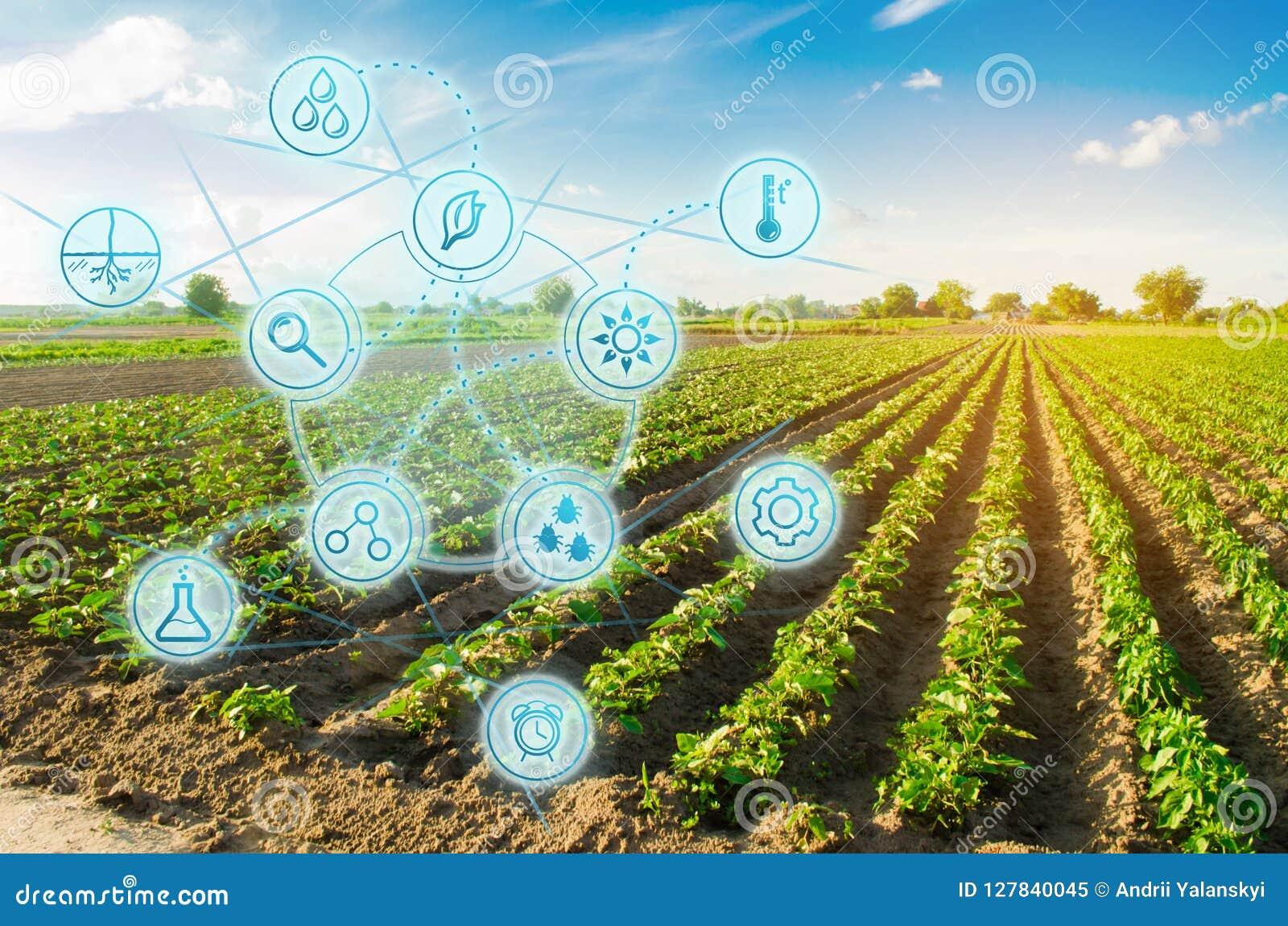 Peppar för lantgårdfält Innovation och modern teknologi Kvalitets- kontroll, förhöjningskördavkastningar Övervaka tillväxten av v
