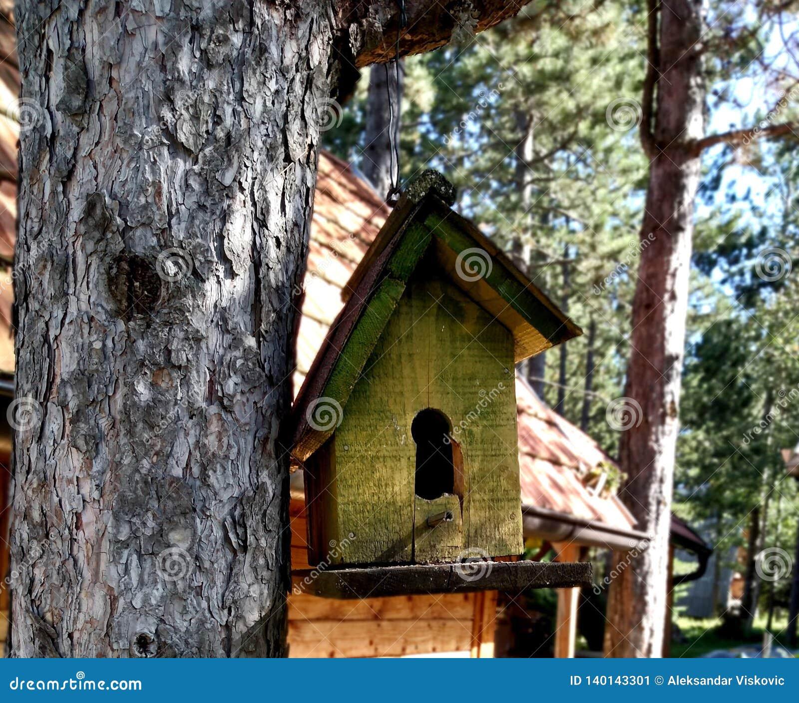 Pequeña casa del pájaro por la cabaña en la madera