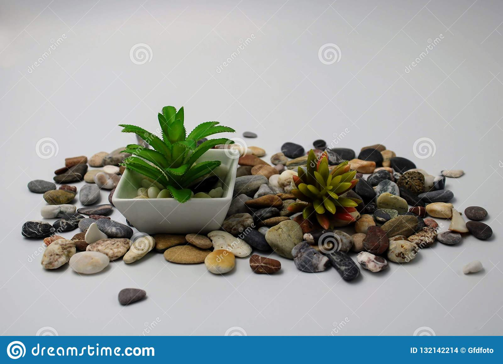 Pequeña maceta con la planta