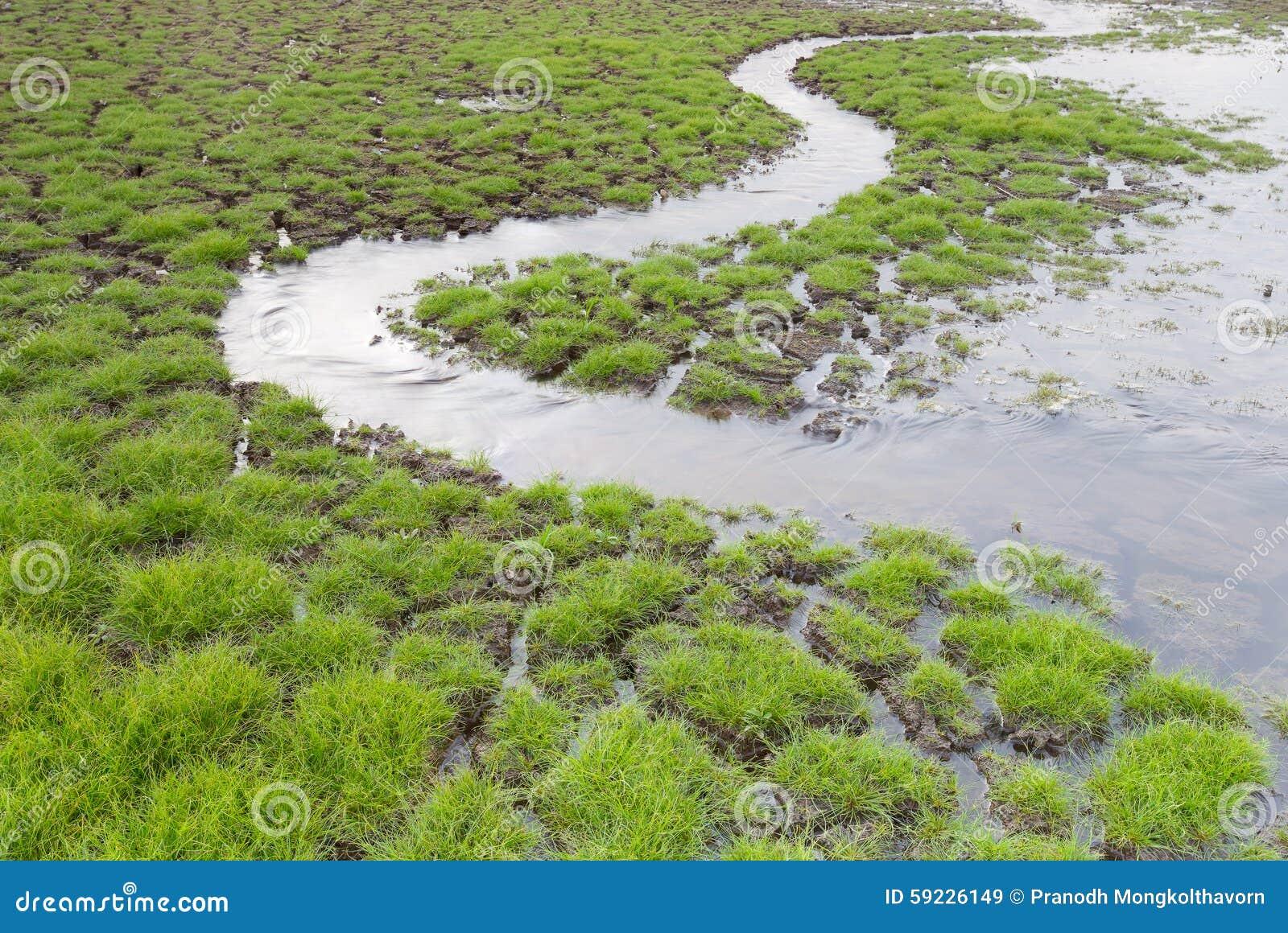Download Pequeña Manera Del Agua Con El Vidrio Verde Del Nacimiento Temprano Imagen de archivo - Imagen de destrucción, sequía: 59226149