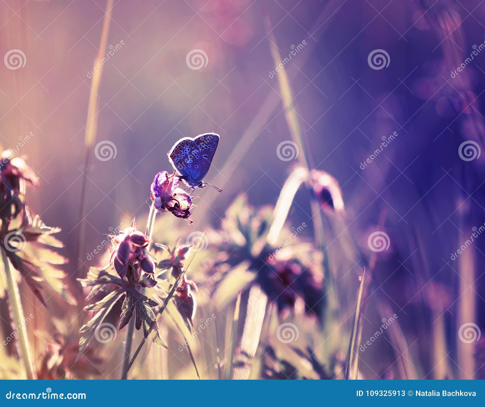 Pequeña mariposa azul linda que se sienta en una f delicada y hermosa