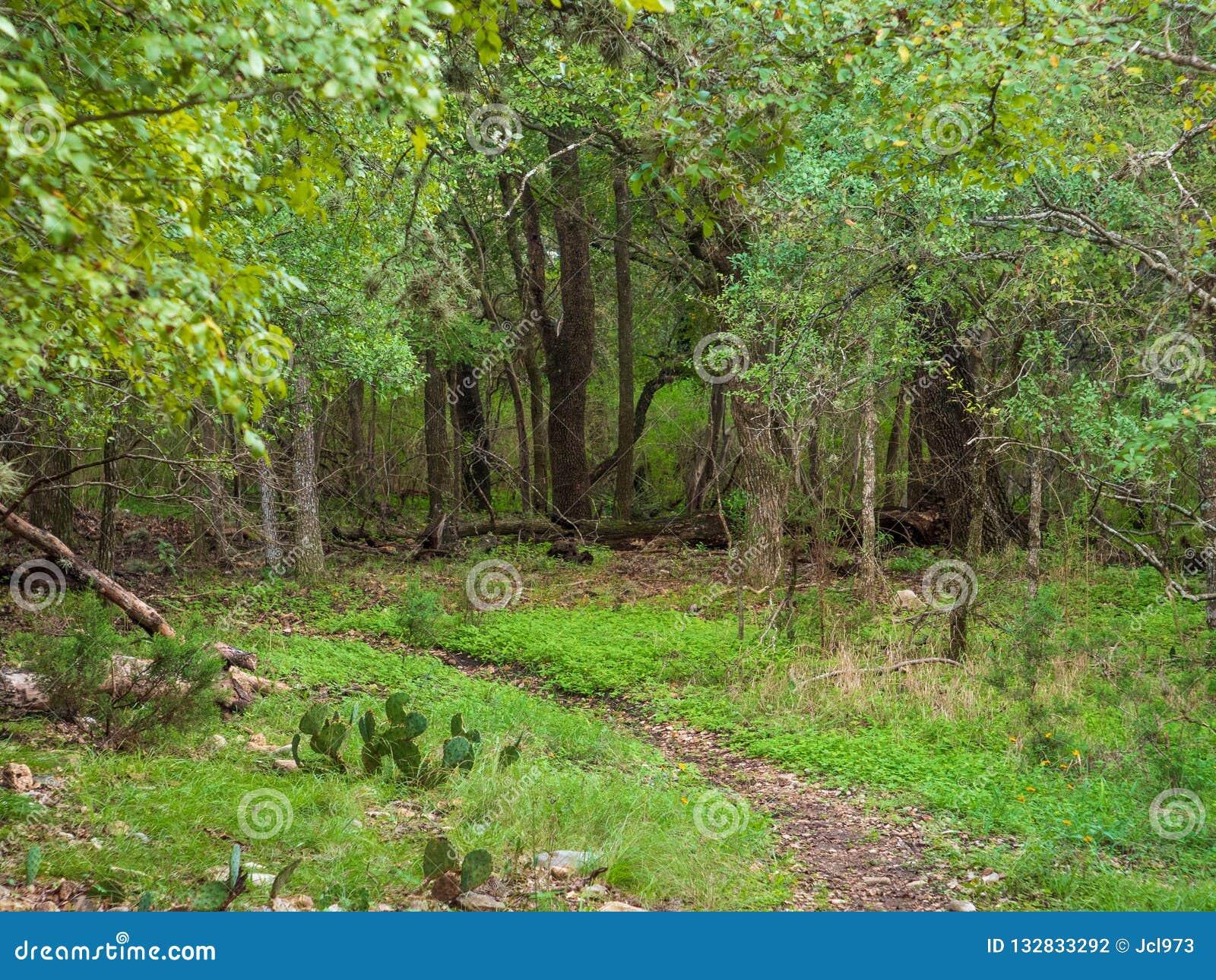 Pequeña trayectoria de la suciedad a través del bosque verde enorme