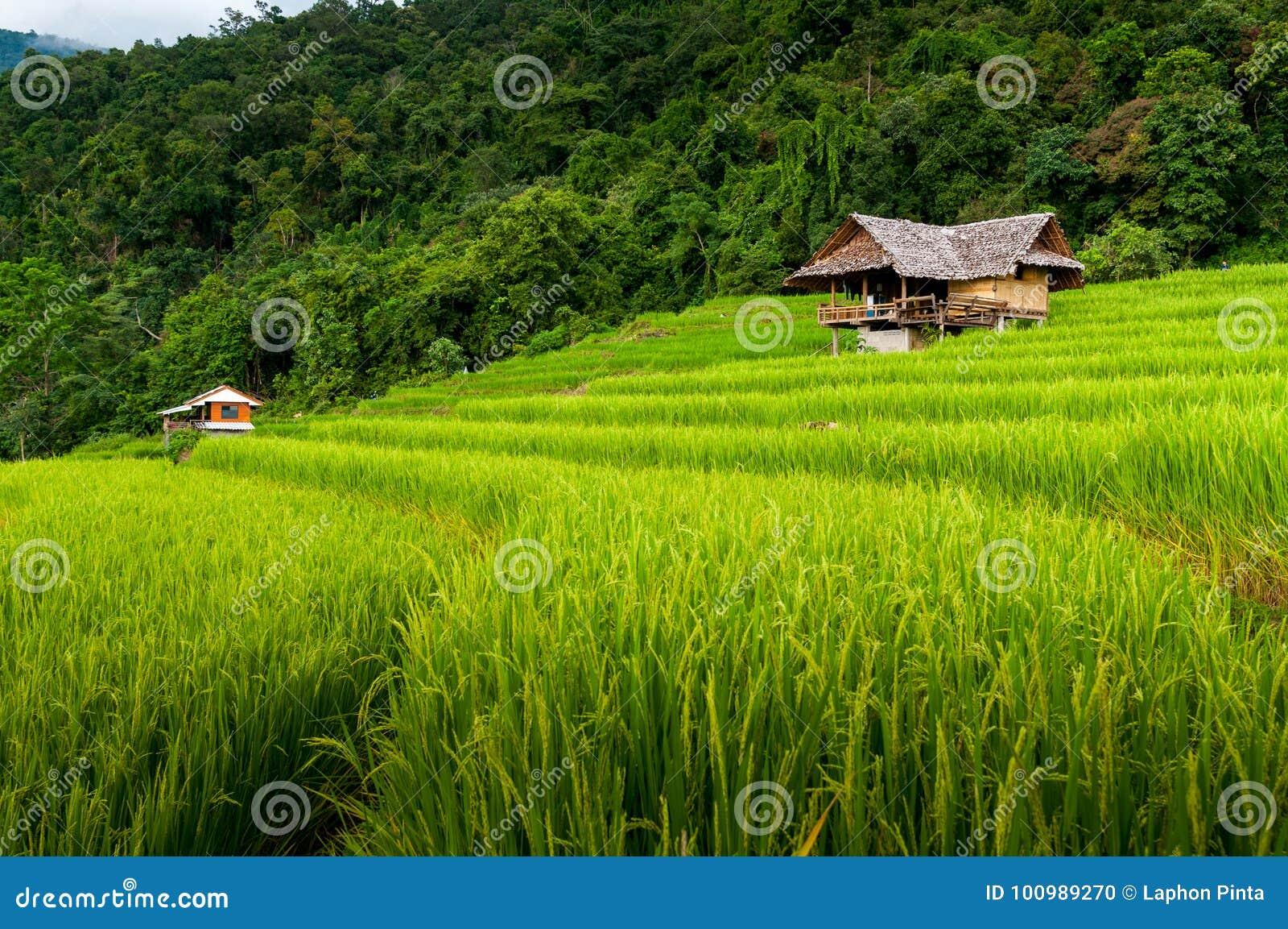 Pequeñas Cabañas Entre Terraza Verde Enorme Natural Del