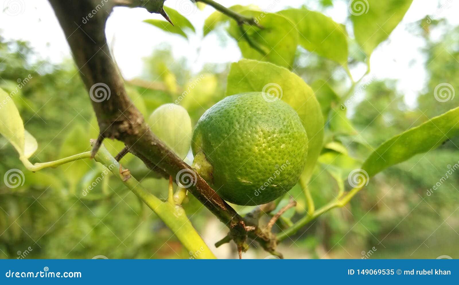 Pequeñas comidas del limón