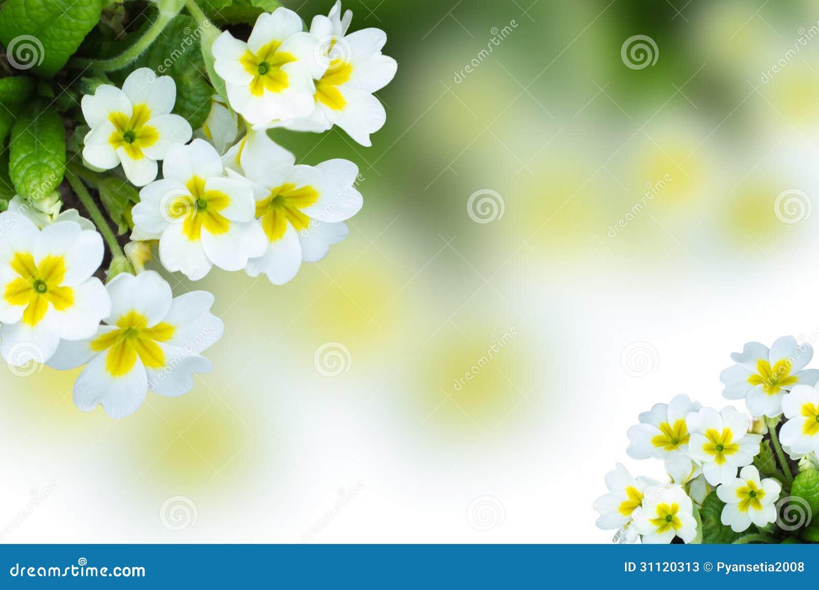 Peque as flores blancas de la primavera de bush stock de - Plantas de temporada primavera ...