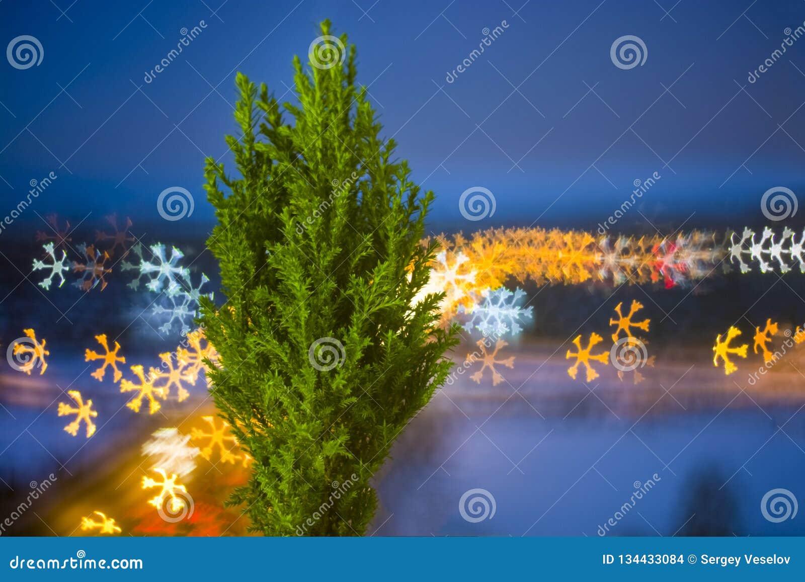 Pequeño árbol de navidad vivo en un pote en fondo del bokeh copo de nieve del bokeh