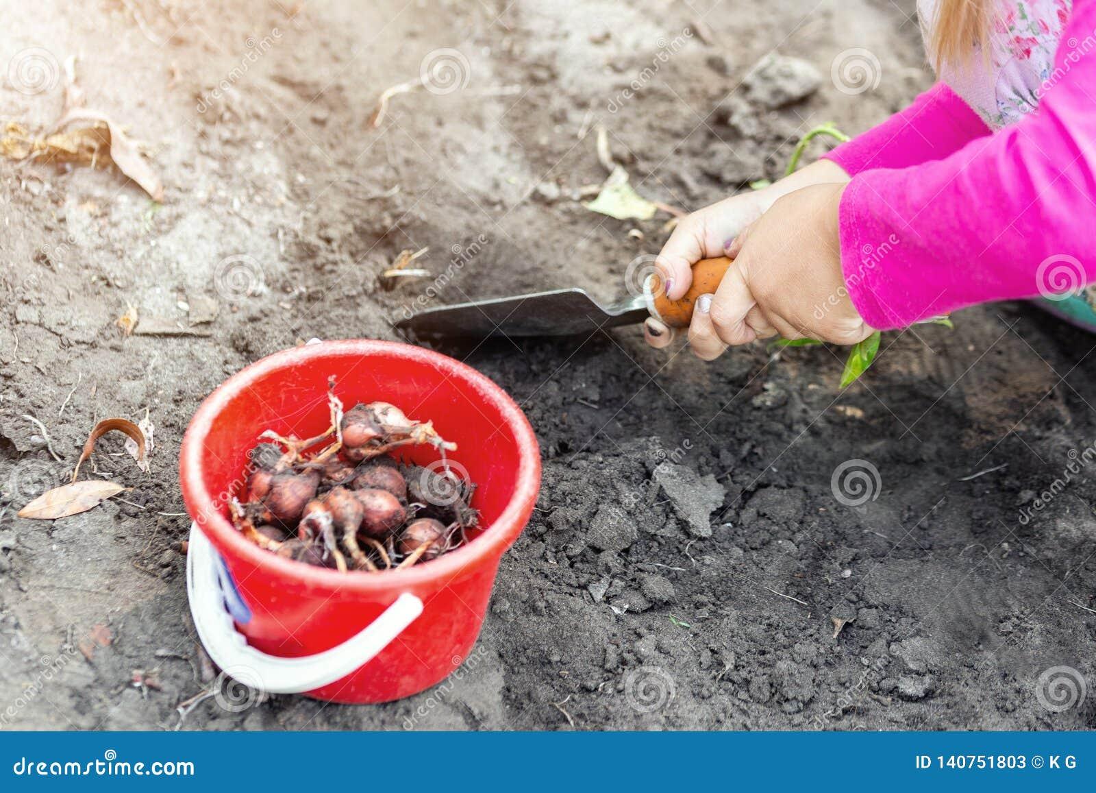 Pequeño bebé lindo que planta almácigos del bulbo del tulipán Poco concepto del jardinero del niño Actividades al aire libre de l