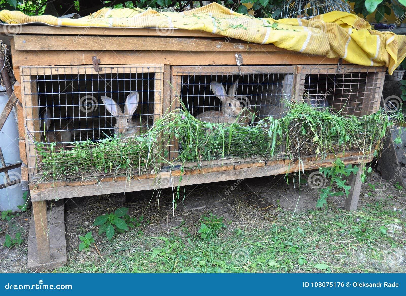 Pequeño cultivo del conejo Conejos de alimentación Jaula del conejo