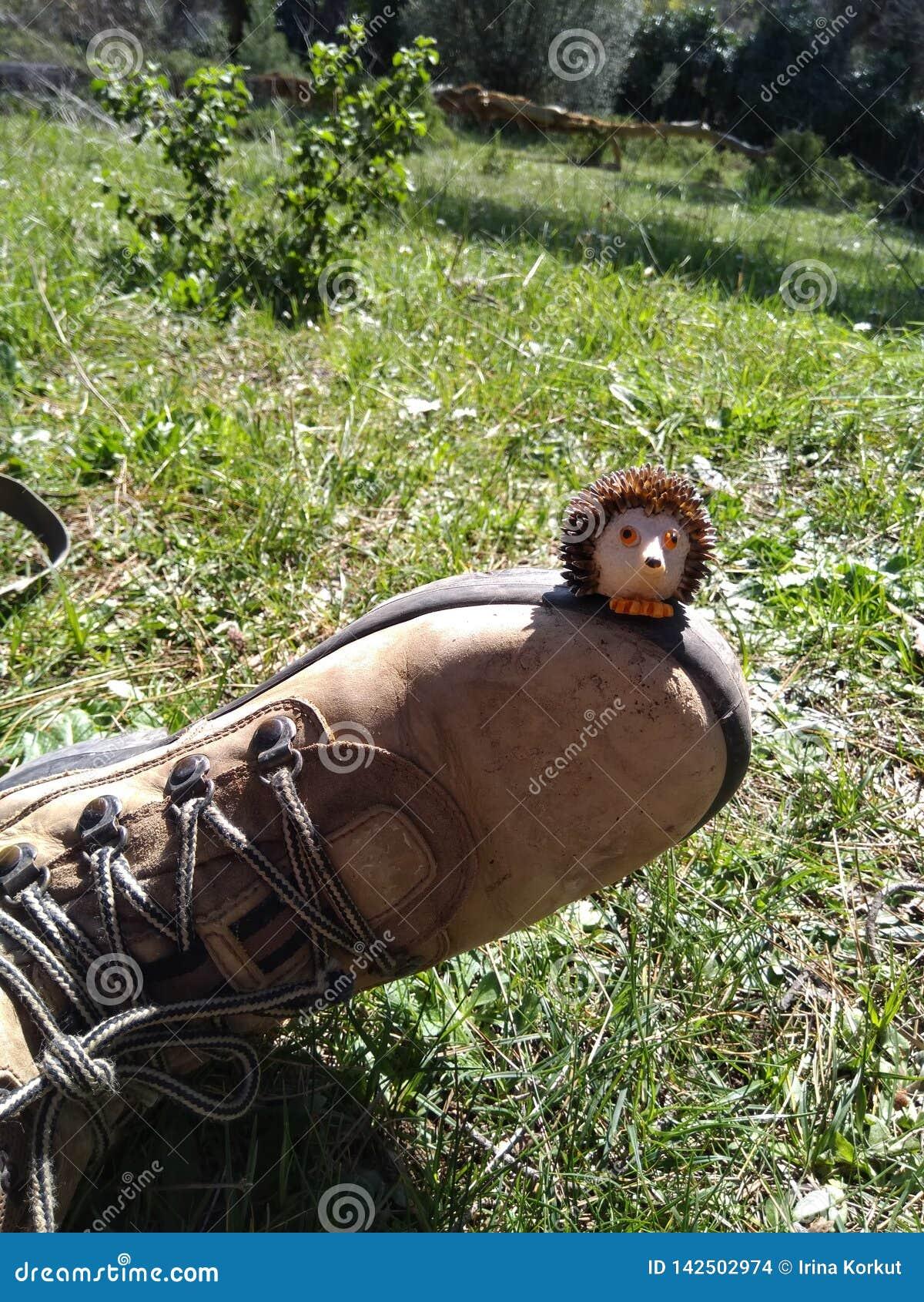 Pequeño erizo dulce que se sienta en el zapato