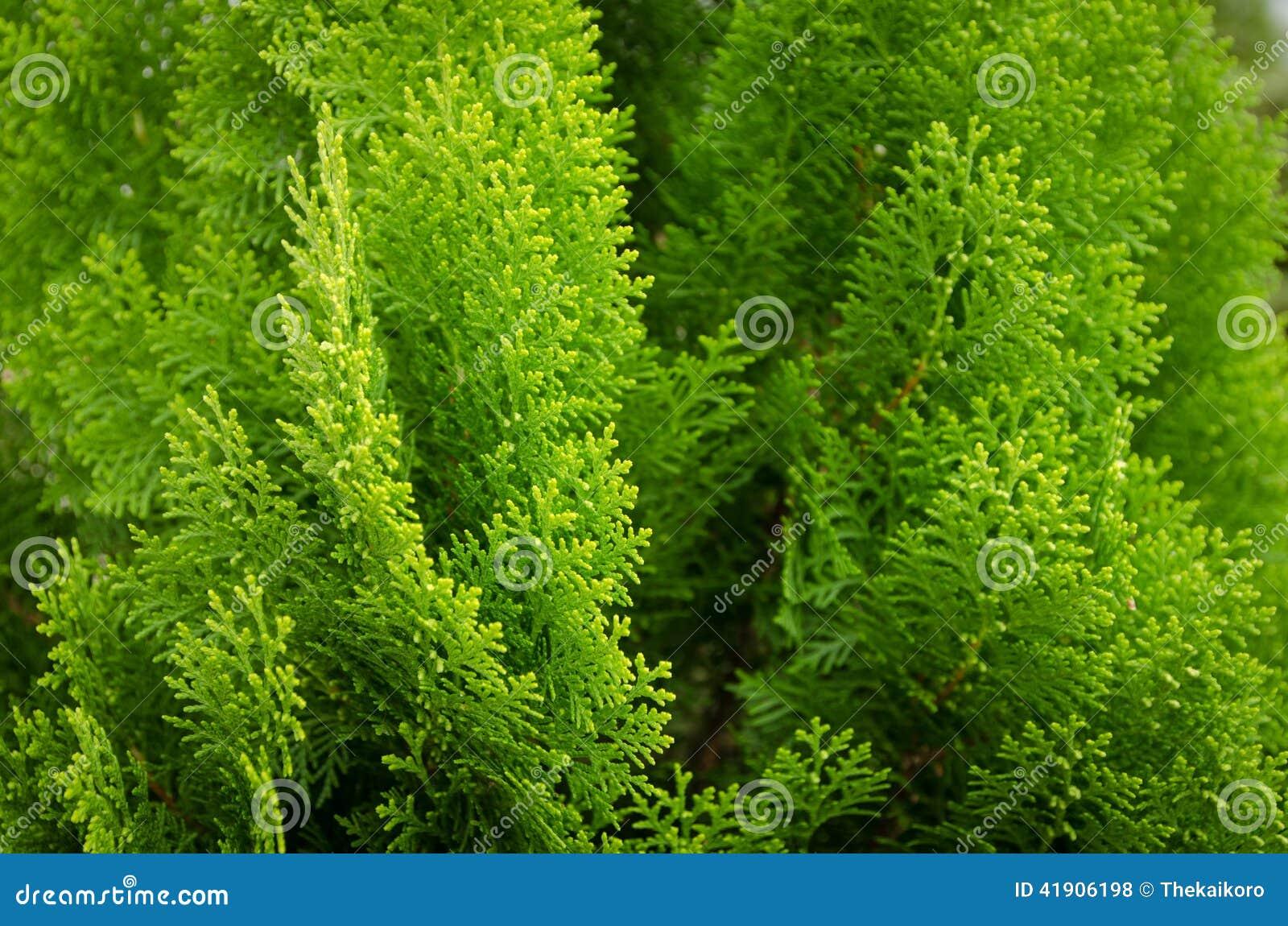 Pequeño fondo de las plantas