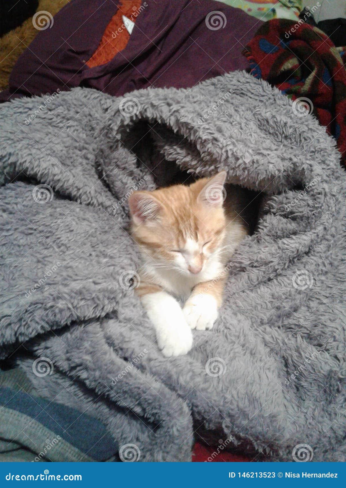 Pequeño gatito acogedor