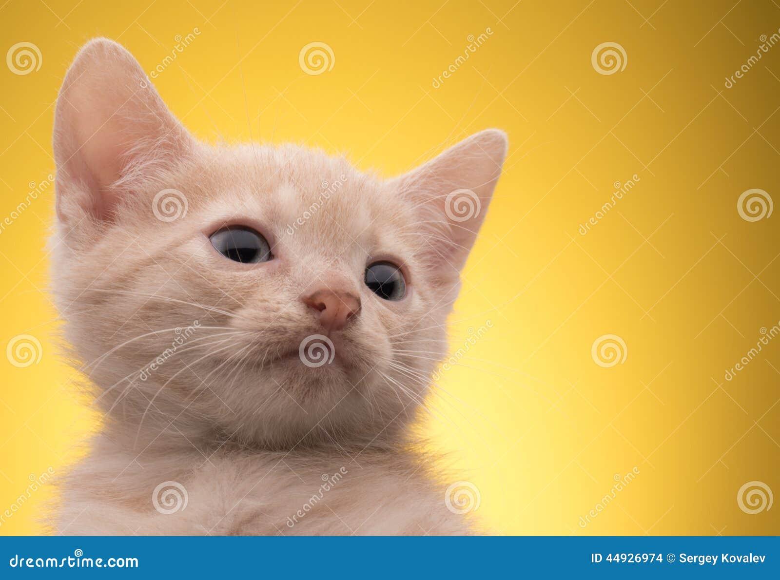 Pequeño gatito divertido