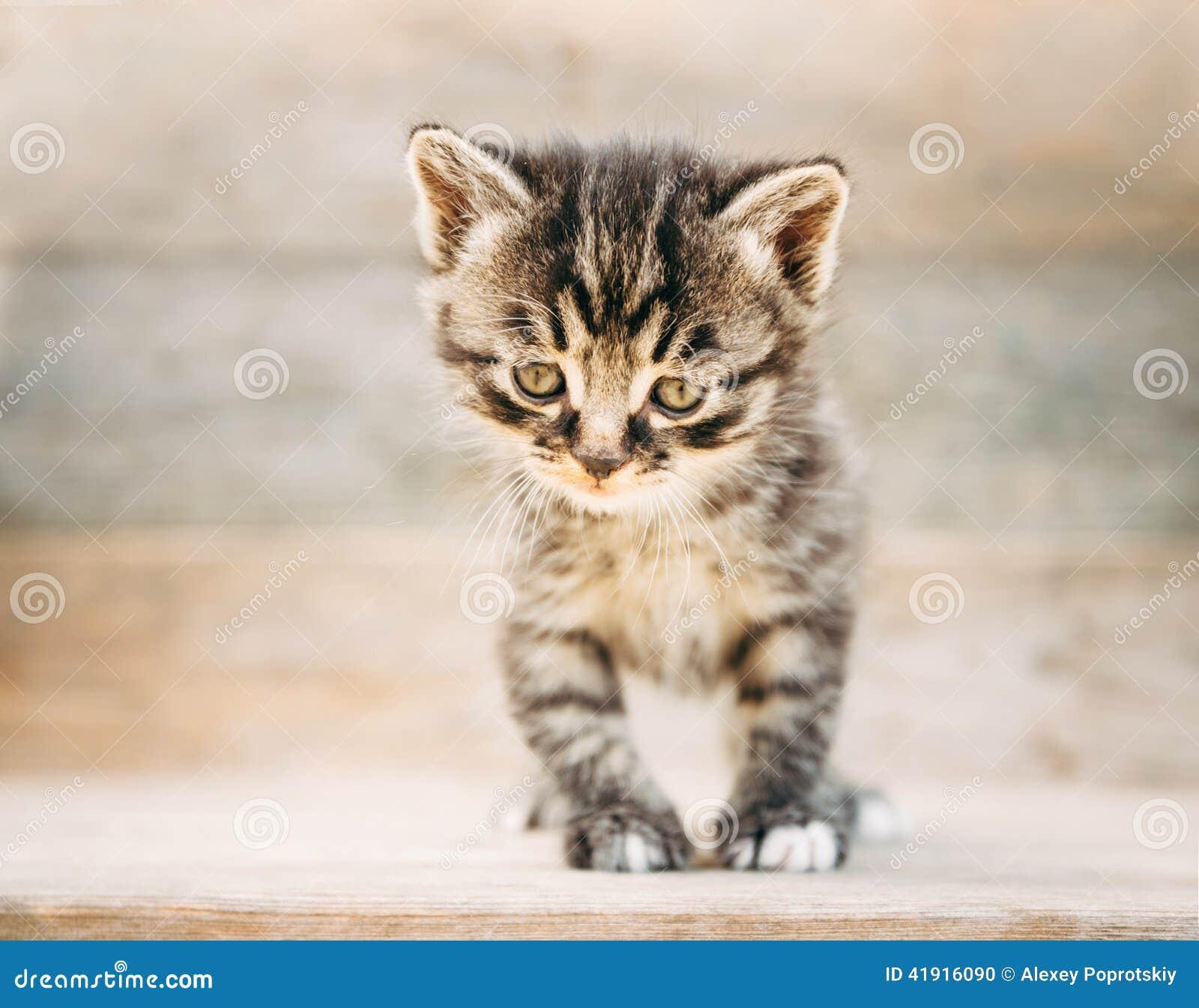 Pequeño gatito lindo