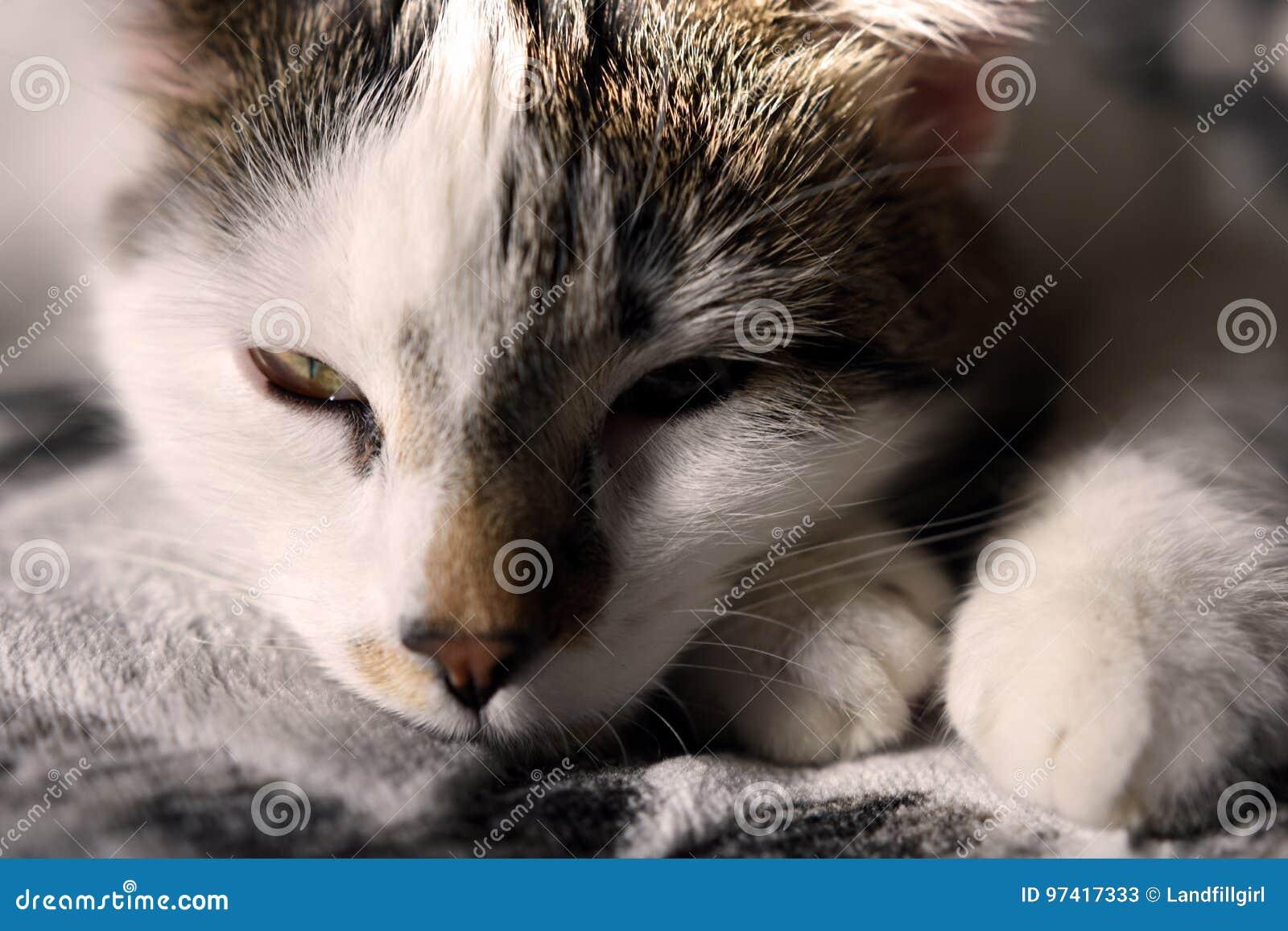 Pequeño gatito soñoliento
