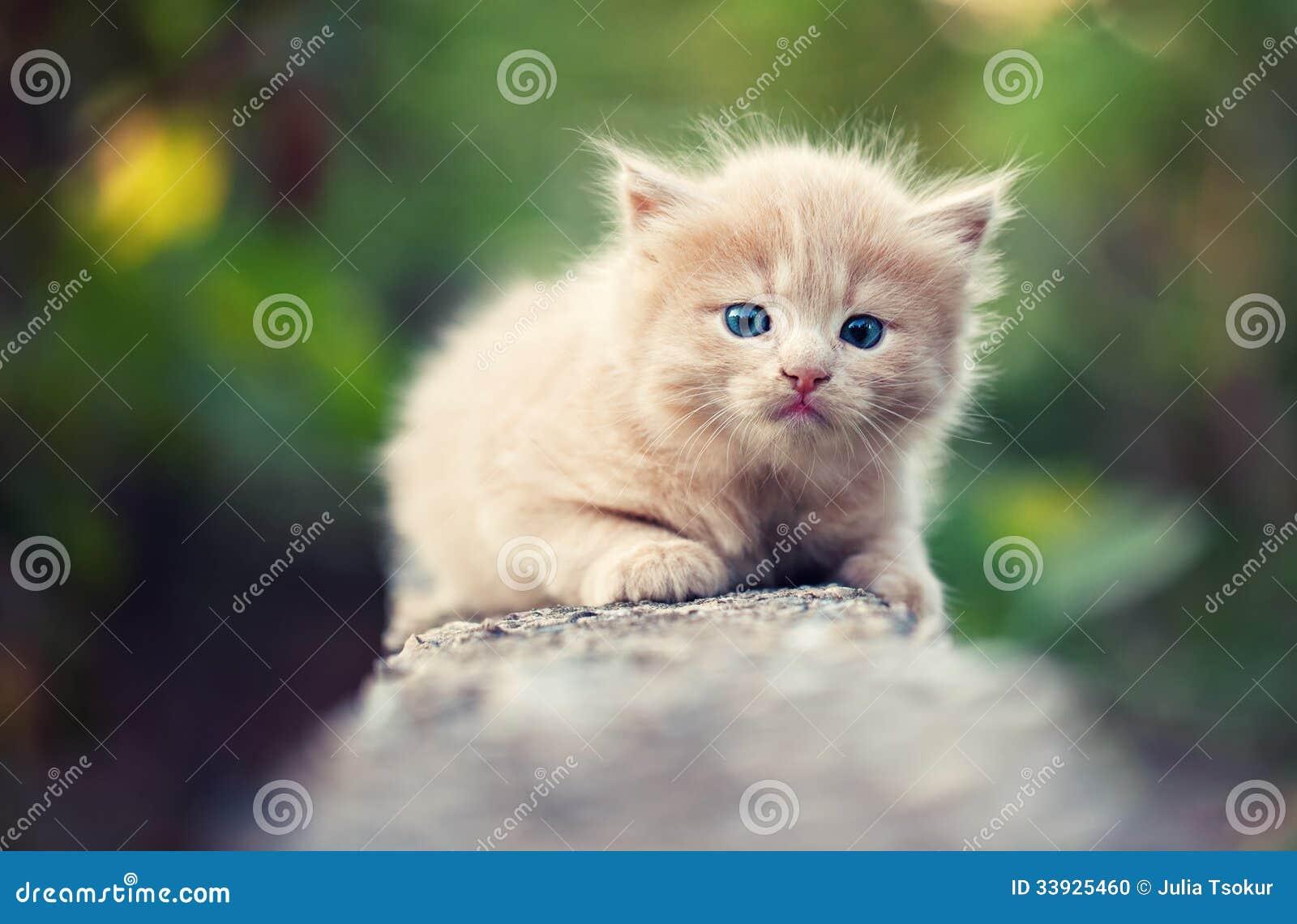 Pequeño gatito triste