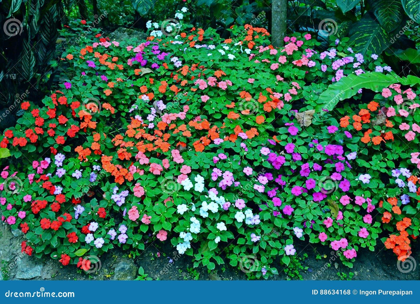 Pequeno Jardin De Flores Colorido Stock De Ilustracion Ilustracion
