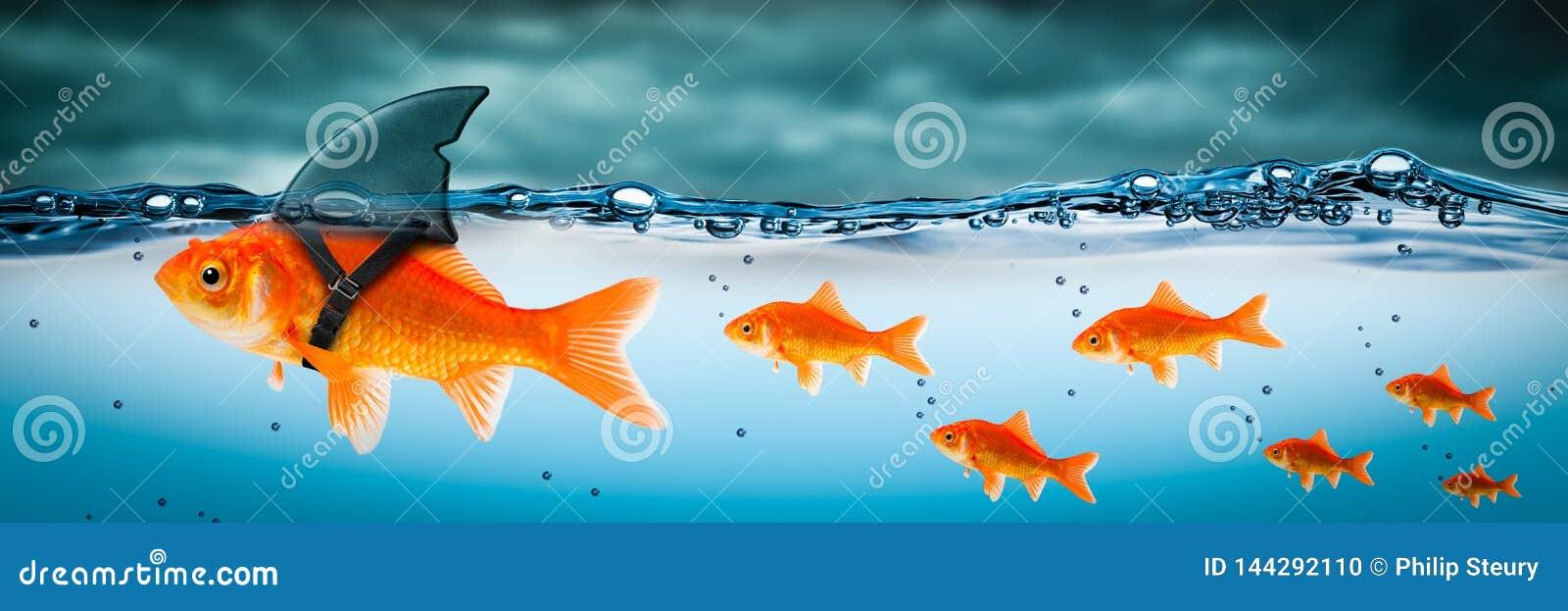 Pequeño líder valiente del pez de colores