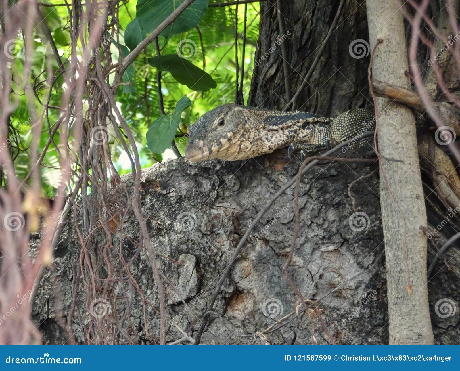 Pequeño lagarto asiático en un árbol en el medio de Bangkok