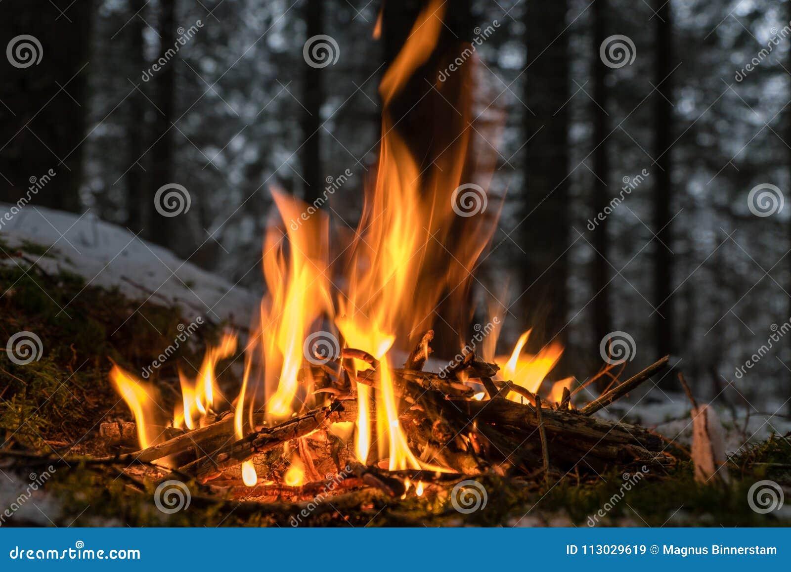 Pequeño lugar del fuego en el bosque