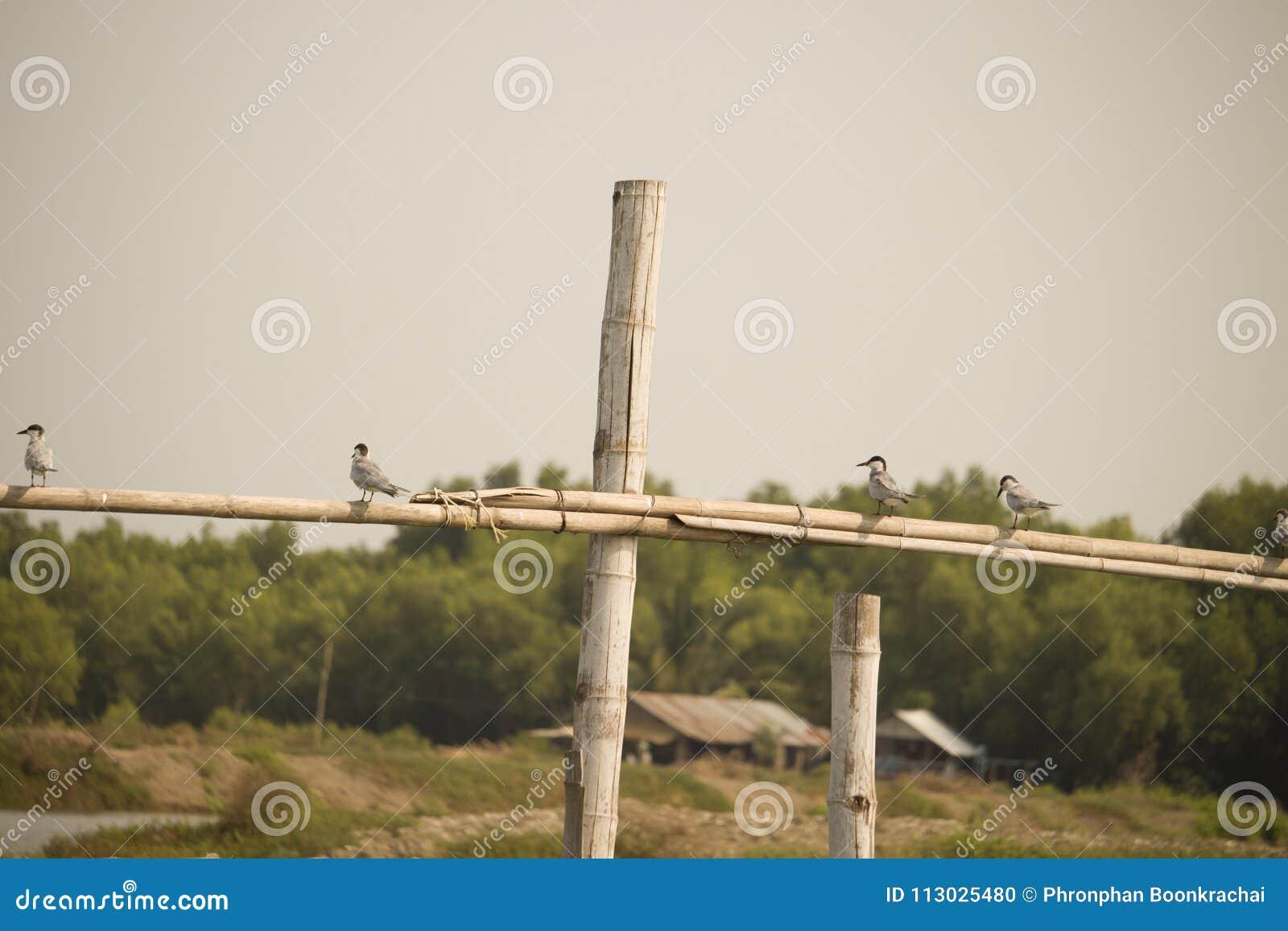 Pequeño pájaro en bambú en Asia