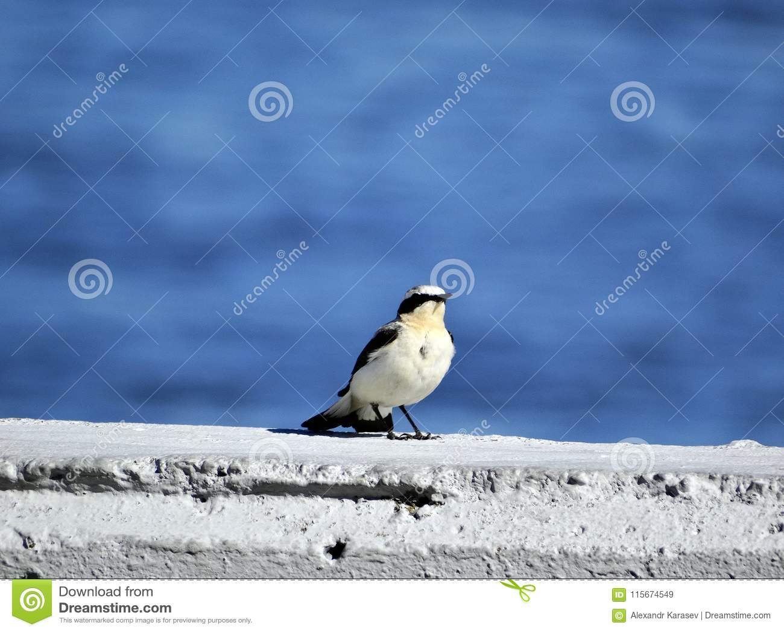 Pequeño pájaro gris