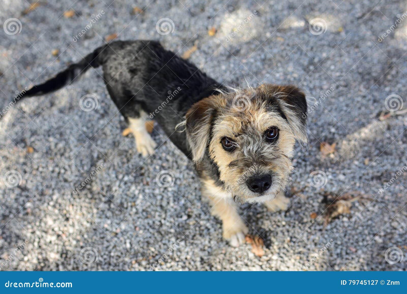 Pequeño perrito al aire libre