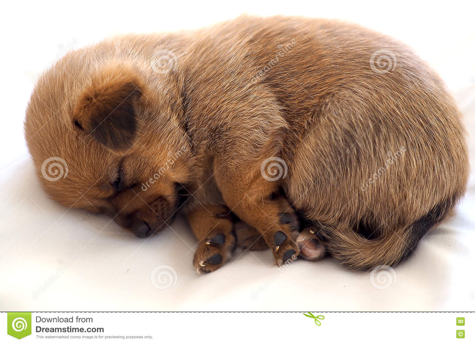 Pequeño perrito lindo dormido